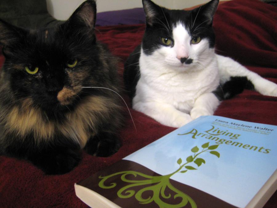 cats of south dakota